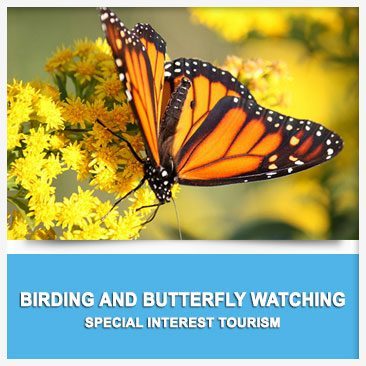 Birding and Butterfly Watching