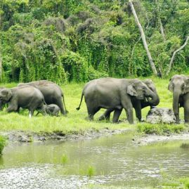 MAHANANDA WILDLIFE SANCTUARY